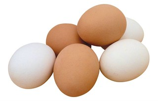Egg-protein-source