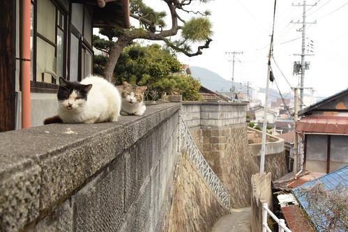 猫@尾道 (9).20160308.1406