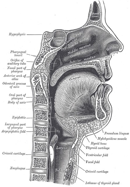 Digestion 101 // Part 1: The Brain and The Mouth