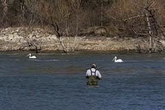 Fishin' for Pelicans