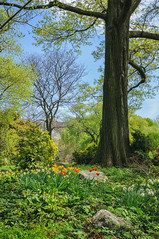 Brooklyn Botanic Garden, Brooklyn, New York