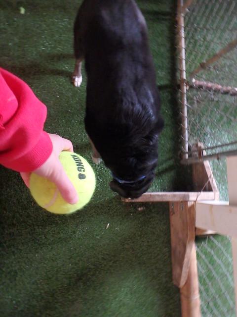3/19/16 Tennis Ball Play!