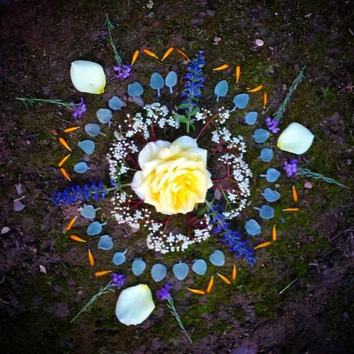 Garden Mandala No. 30 #spring #gardening #flowers #mandala #triangle #flowerstagram #roses #calendula