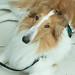 Service Dog on Duty