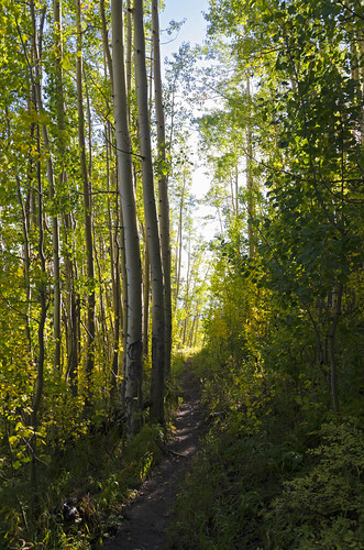 colorado hiking aspen sanjuanmountains aspenforest nikon7000