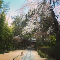 earlier❤︎ #latergram #cherryblossom #osaka #ikeda #尊鉢厄神 #sonpachiyakujin #池田 #大阪