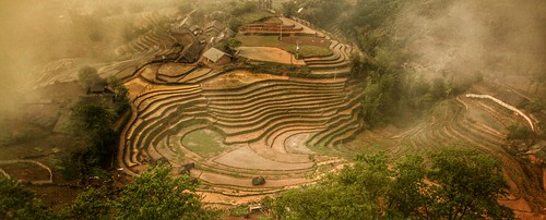 sapa vietnam vietnamese paddyfield ricefield riceterrace travel travelling yachtpagos