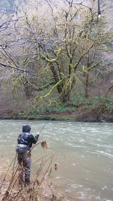swinging flies for winter steelhead