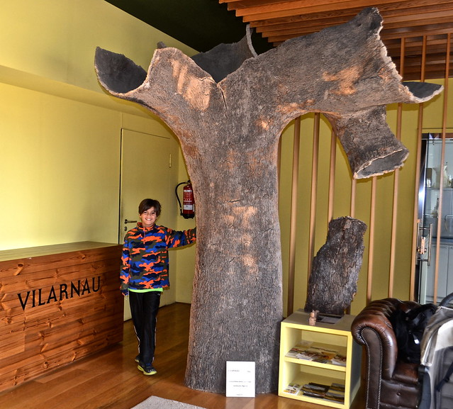 cork tree - Vilarnau cava wine tour barcelona