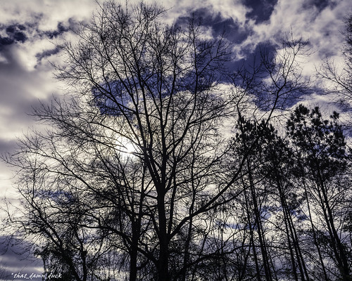 trees nature clouds unitedstates southcarolina naturephotography depthofview