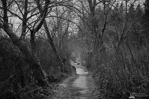 statepark nature monochrome washington northwest trail pacificnorthwest boardwalk washingtonstate blackandwhitephotography photooftheday naturephotography thurstoncounty millersylvaniastatepark photographersontumblr originalphotographers