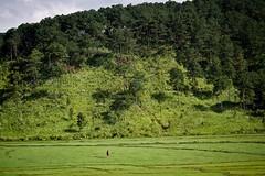 Hundreds of fields of green beauty!