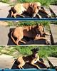 #Loki 's new morning ritual. #sunsalutations #dogsofinstagram