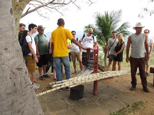 La Valle de los Ingenios: la canne à sucre