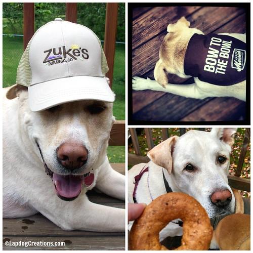 #Zukes #Merrick #SolidGold #Chewy #AngelDog #HappyOldDog #SmilingDog #LapdogCreations ©LapdogCreations