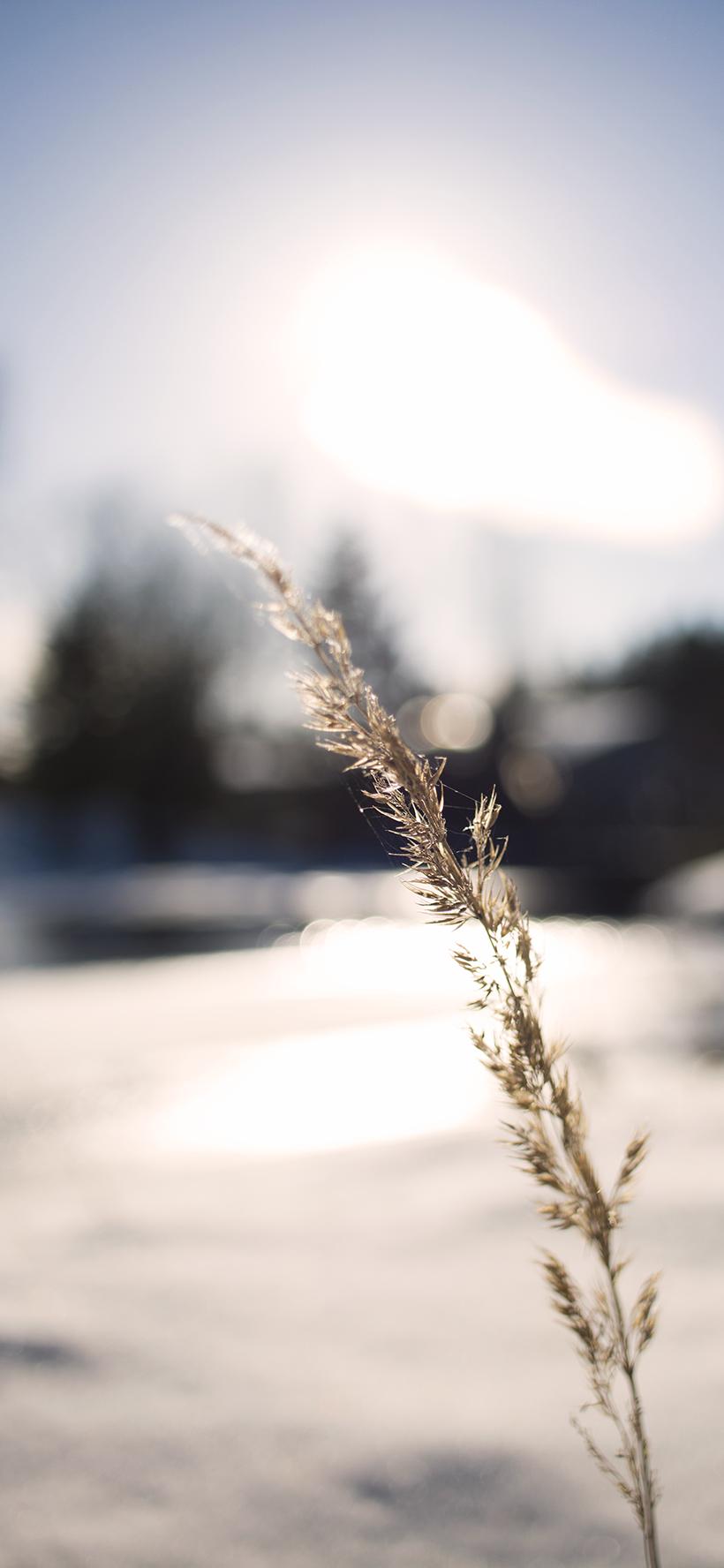 jerE_viinikainen_kevät_luonto_photography2