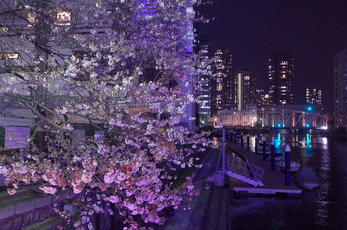 Sakura night walking 02