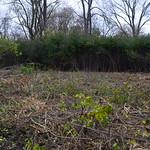 Cleared wetland