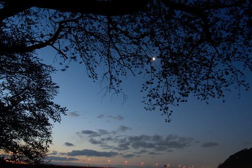 japan sunrise river cherry kyoto 桜 川 京都府 朝日 八幡市 背割堤