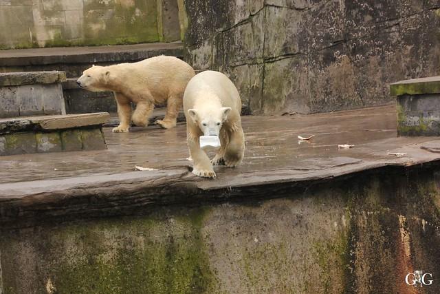 Besuch Zoo Rostock 12.03.201626