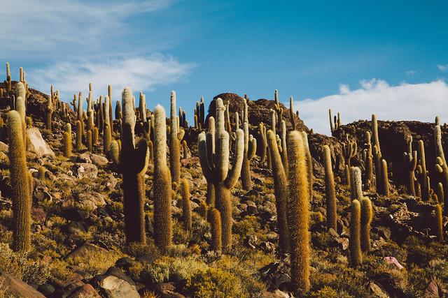 Inca Wasy Island