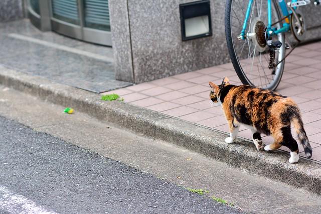 道路を歩くネコの写真