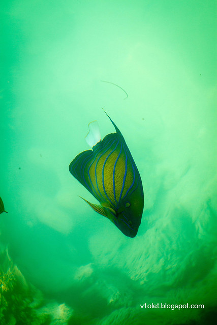 Pulau Putri Ikan8-2381rw