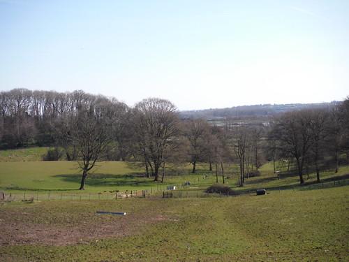 View north east of Shrub Wood