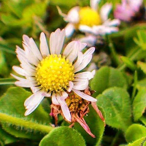 #germany #deutschland #thüringen #turingia #bleicherode #springtime #spring #flower #flowers #flowerstagram #floweroftheday #green #yellow #garden #park #nature #instanature #instadaily #frühjahr #frühling #goodday #instagood