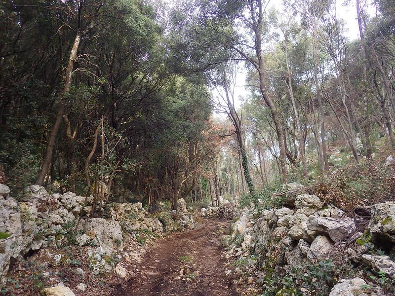 Il bosco delle Pianelle