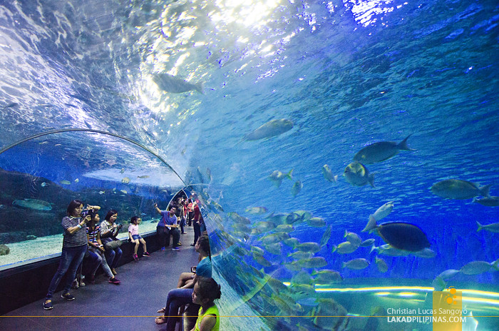 manila ocean park Buy your manila city tour and tagaytay ridge combo from manila with musement with our price match guarantee and secure booking get informed, plan and.