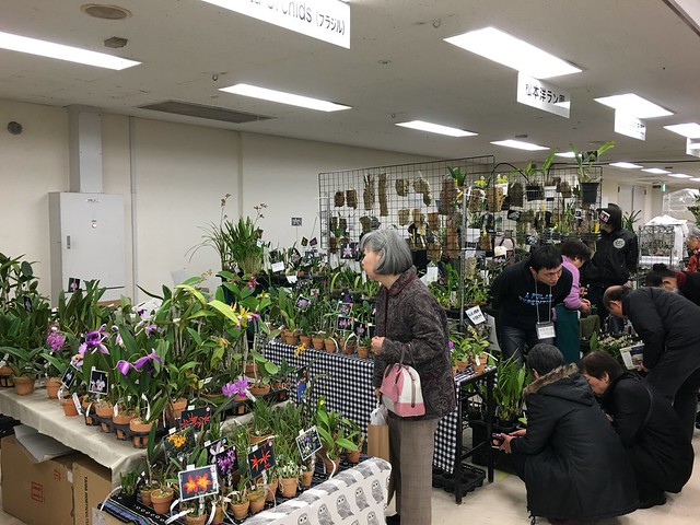 2016/01/07 サンシャインらん展 Bela Vista Orchids