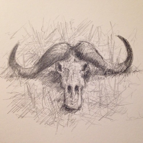 Maybe a gnu or wildebeest skull, not sure