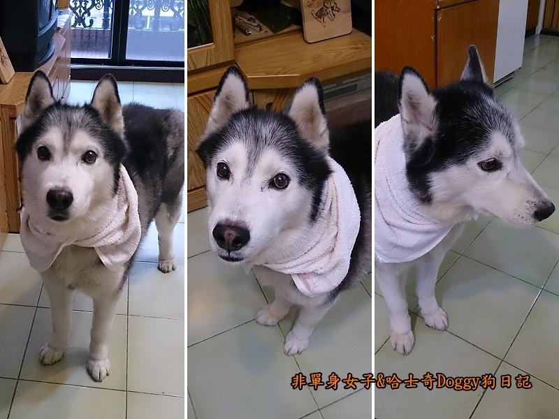 Doggy保暖墊11