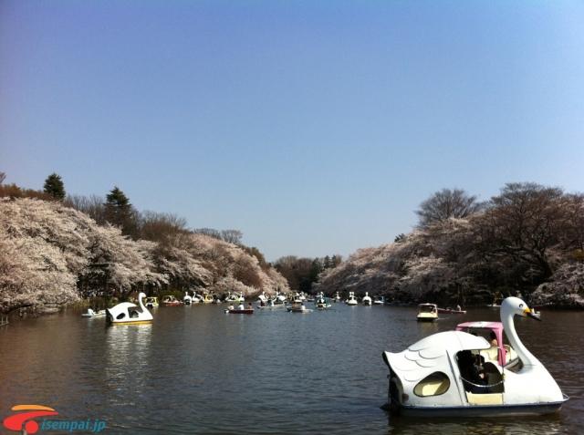 Những điểm hẹn hò Những điểm hẹn hò lãng mạn nhất Tokyo Phần 1 24074963660 a0b816bca4 o