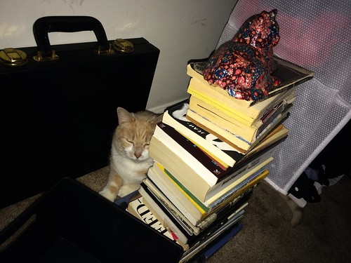 Cats and Books (January 12 2015)