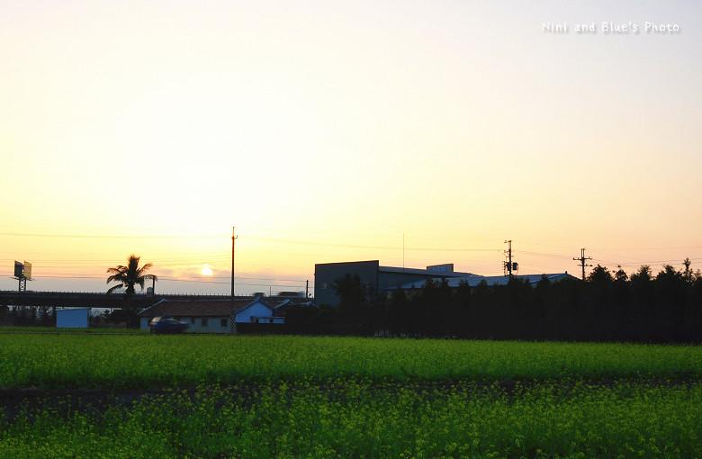 芬園落羽松09