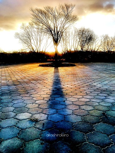 morning shadow tree japan aomori hachinohe 木 青森 影 八戸 xperia