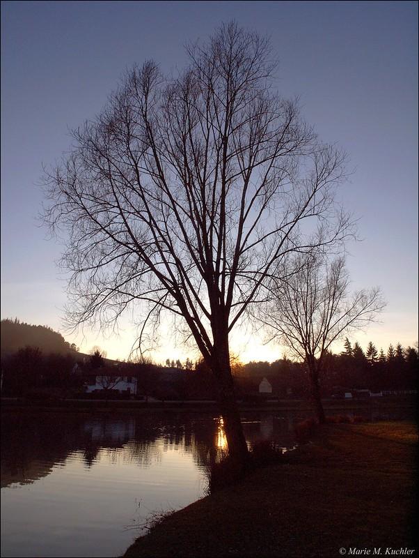 Silhouette de l'arbre dénudé   24500820102_e4165f7caf_c