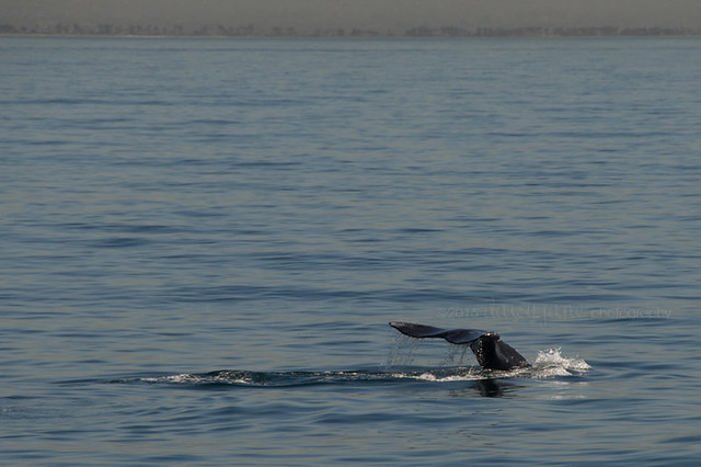 whale watching-45web