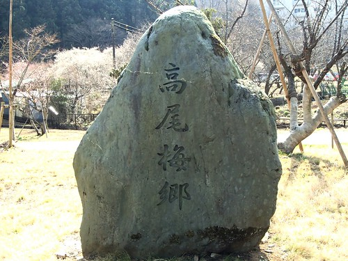 高尾山周辺散歩 梅花満開 - naniyuutorimannen - 您说什么!