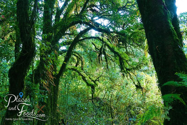 doi inthanon ang ka nature trail beautiful branches