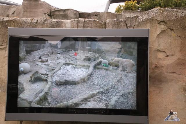 Eisbär Lili im Zoo am Meer Bremerhaven 10.04.2016 Teil 1 64