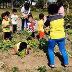 20160408_幼兒園摘菜