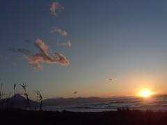 big bird is watching the sunset