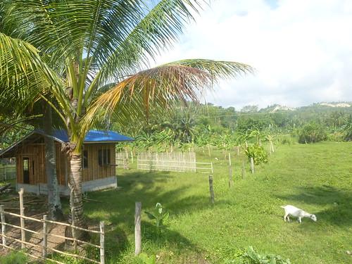 P16-Negros-San Carlos-Dumaguete-Route (22)