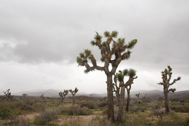 Desert Sanctuary