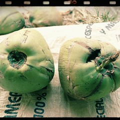 Coconut #ทำขนมวันสงกรานต์