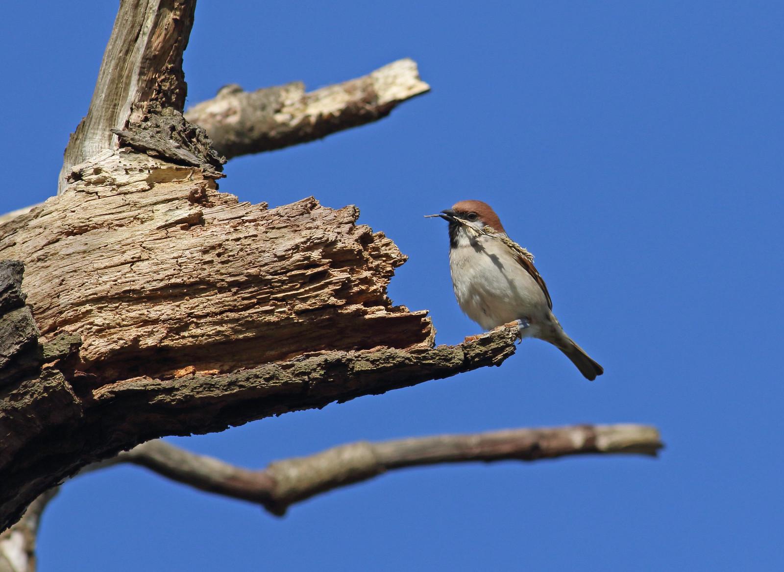 sparrowsetc0122