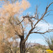 Desert Tree by john farrell macdonald